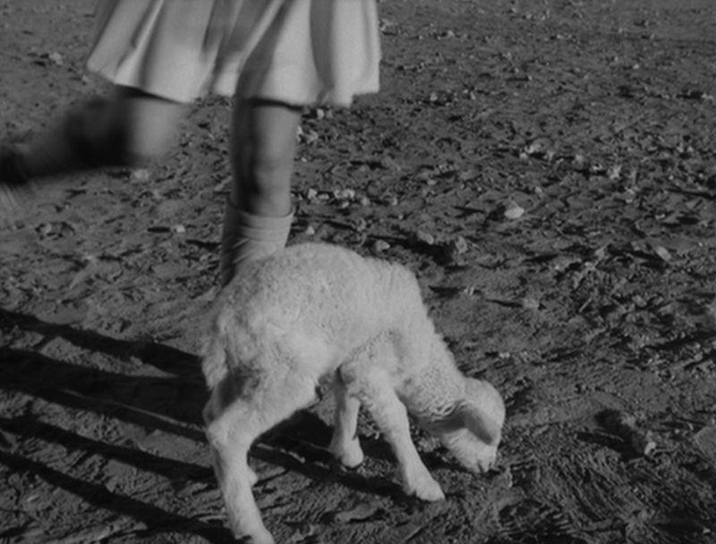Lamb #1